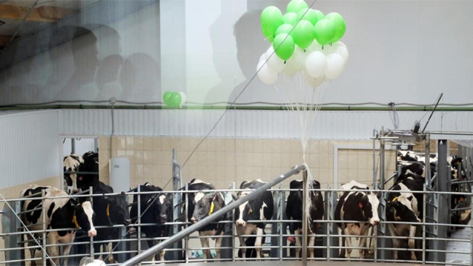 В Каменском районе открыли новый молочный комплекс на 2200 голов