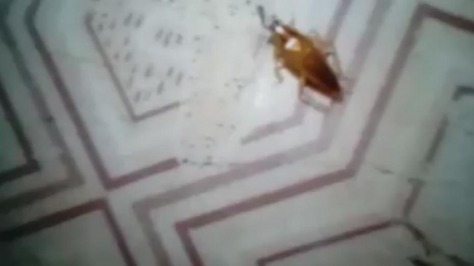 Главврач Воронежской областной детской больницы: «Проблема с тараканами у нас есть»