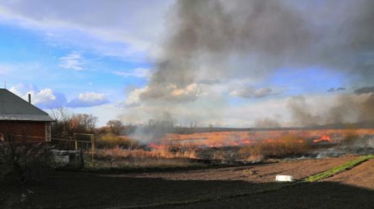 В Бобровском районе выгорело 2 га камыша