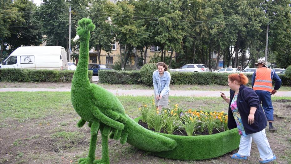 В борисоглебском сквере установили 2 топиарные фигуры павлинов