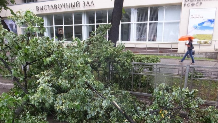 Шквалистый ветер оборвал провода в 28 местах Воронежа