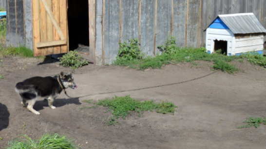 В Воронежской области дворовый пес загрыз годовалого мальчика