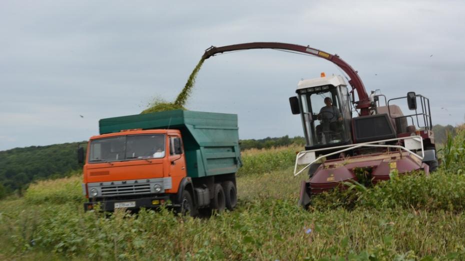 В Нижнедевицком районе начали убирать кукурузу на силос