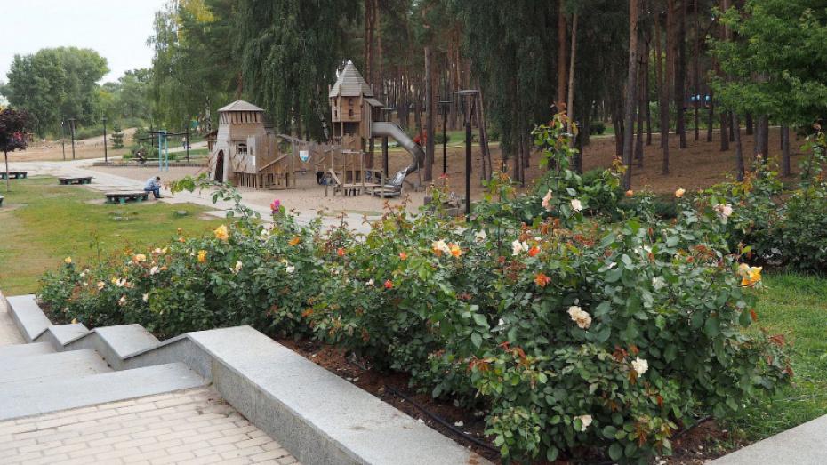 Воронежские власти начали искать подрядчика для обновления парка «Алые паруса»
