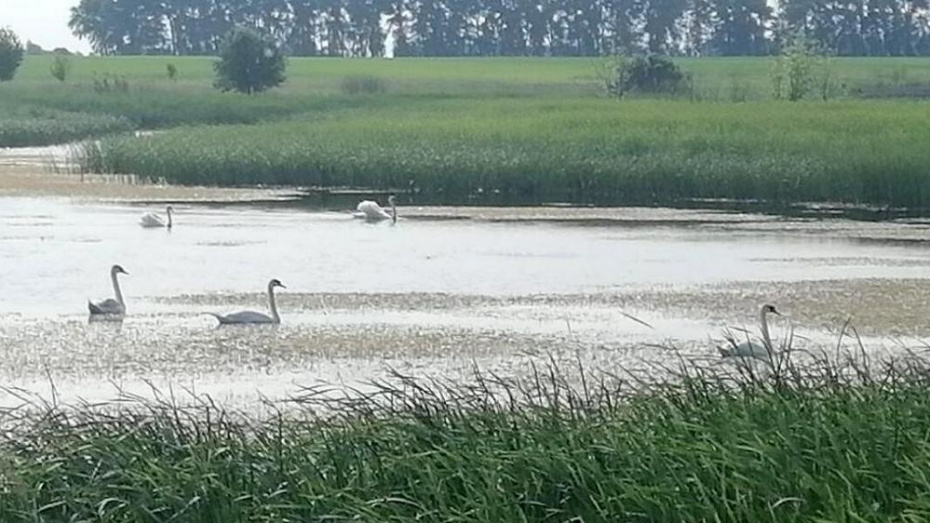 В Терновский район прилетели аисты и лебеди
