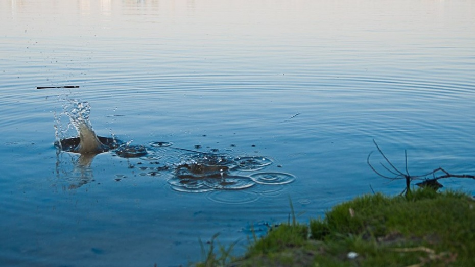 В Рамонском районе утонул мужчина