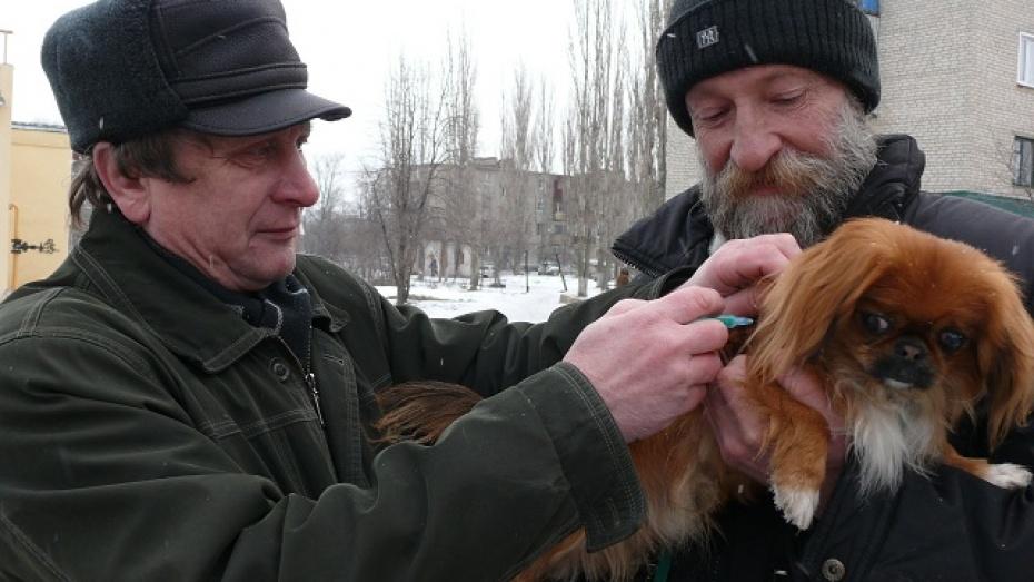 Поворинские ветеринары делают бесплатные прививки от бешенства прямо на улицах