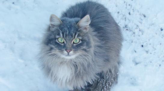 В Каменке объявили карантин по бешенству из-за домашнего кота