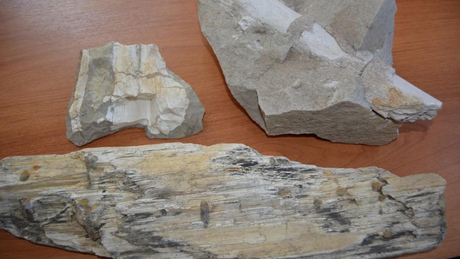В Богучарском районе в камне из местного карьера обнаружили древние окаменелости