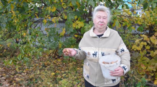 Жительница Терновки собрала на приусадебном участке более 200 кг грецких орехов