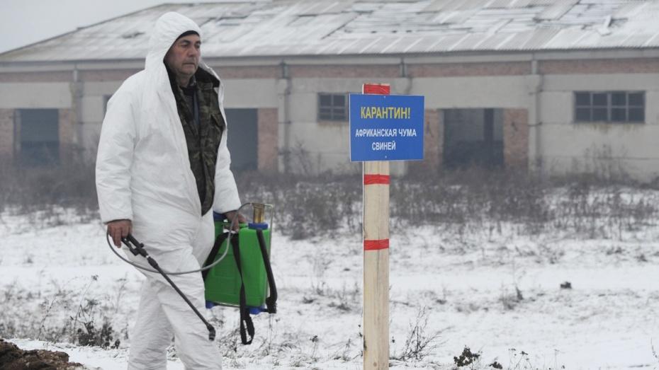ВВоронежской области вновь выявлена АЧС