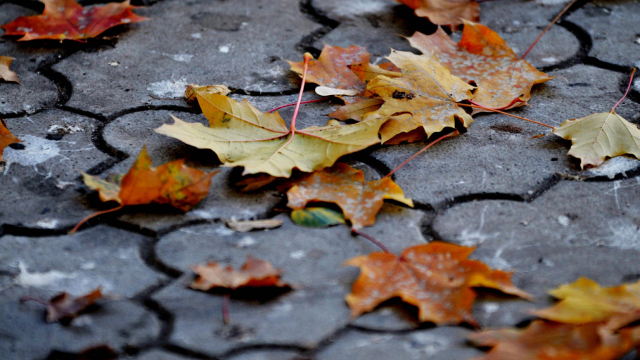 Погода на первой неделе ноября в Воронеже будет теплее обычного