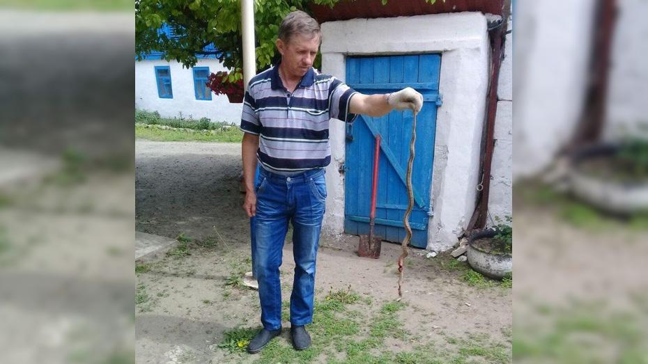 Житель богучарского села Терешково убил 60-сантиметровую змею