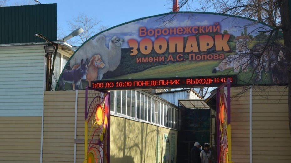 Сегодня воронежский зоопарк будет принимать гостей бесплатно