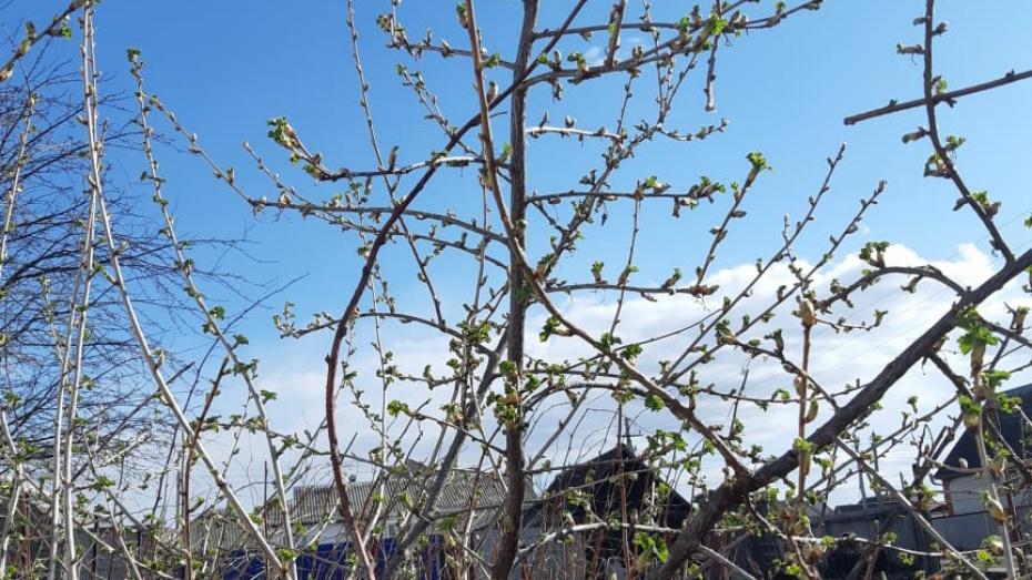 В Таловском районе погода в марте побила температурный рекорд 1892 года