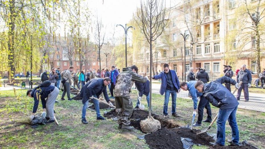 В Воронеже посадили «Депутатскую аллею»