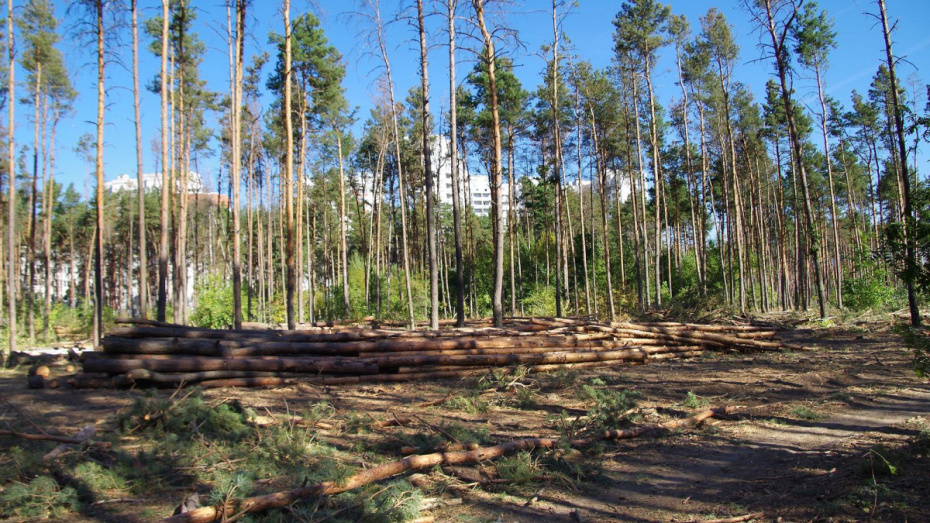В воронежском Северном лесу организуют ежедневную охрану