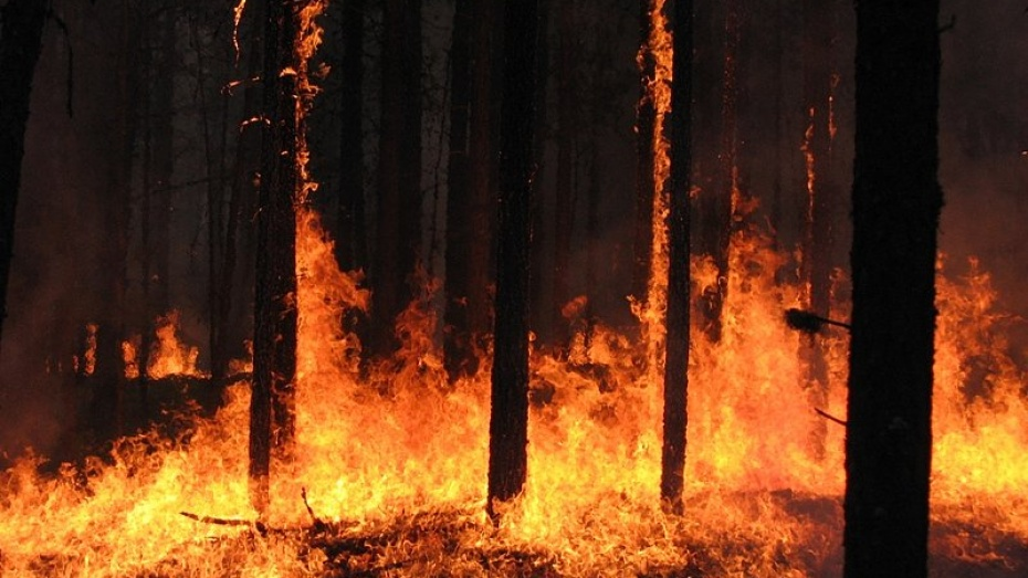 В июле и августе в Воронежской области возможно повторение пожаров лета 2010 года