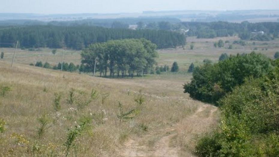 В Таловском районе механизаторы нашли в лесополосе полуразложившийся труп утопленника