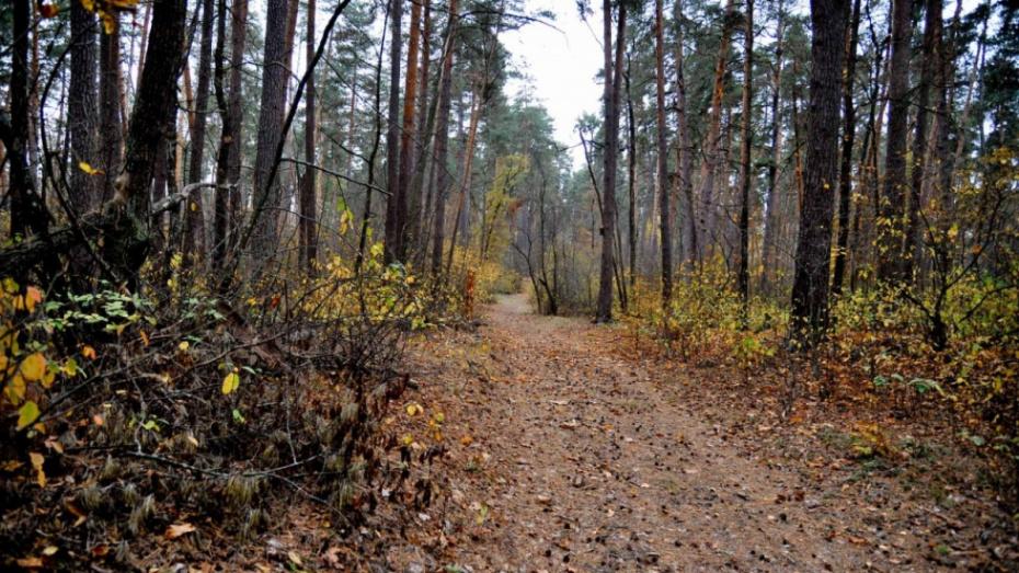 В Воронежской области высадят 259 га леса