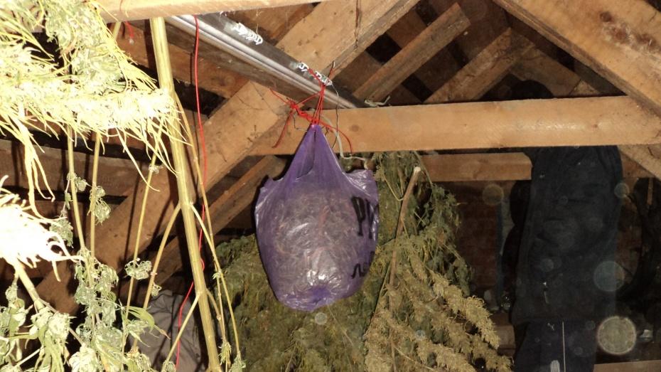 В Острогожском районе у безработного нашли семь килограмм наркотиков