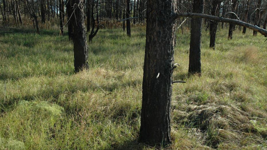 В воронежском парке Оптимистов 45-летняя женщина покончила с собой