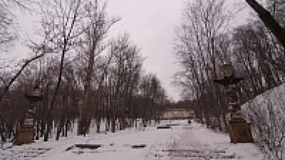 В воронежском парке «Динамо» не будут вырубать деревья для строительства «ливневки»