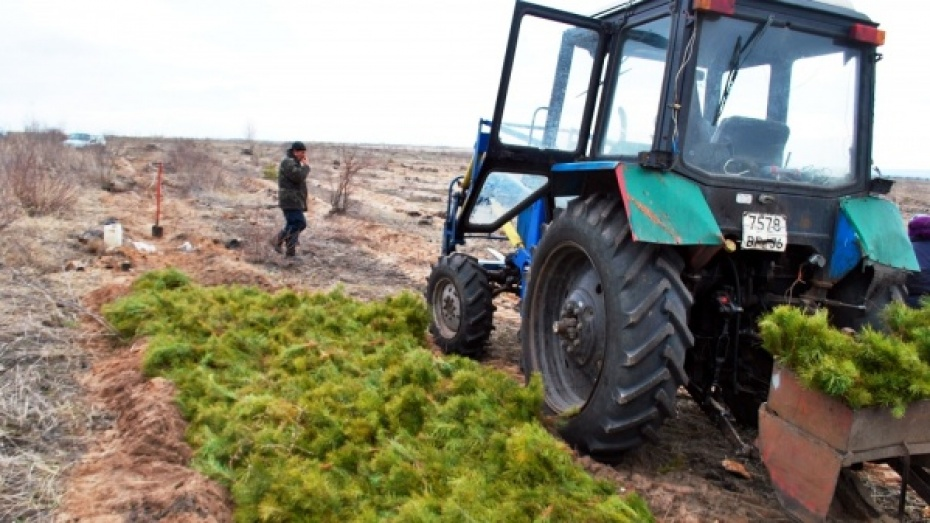 В Воронежской области тракторист наехал на 4-летнего сына