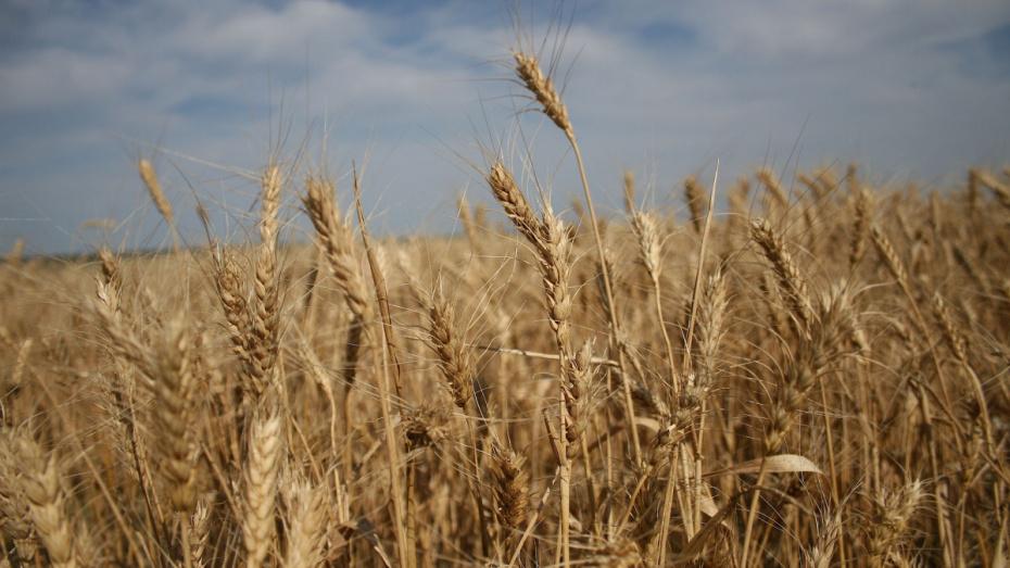 Аграрии засеяли 2,6 млн га полей в Воронежской области