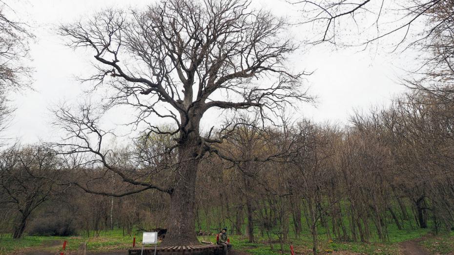 Воронежская область получила 89,8 млн рублей в 2019 году на сохранение лесов