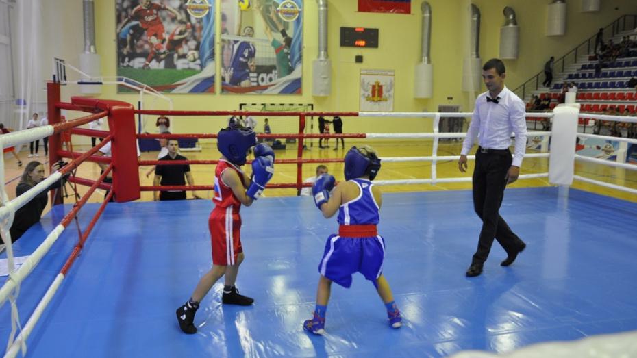 В Павловске проведут областной турнир по боксу «Основатель»