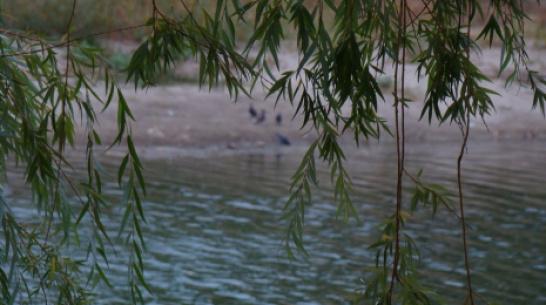 В Верхнем Мамоне в пруду Токаревский утонул 32-летний мужчина