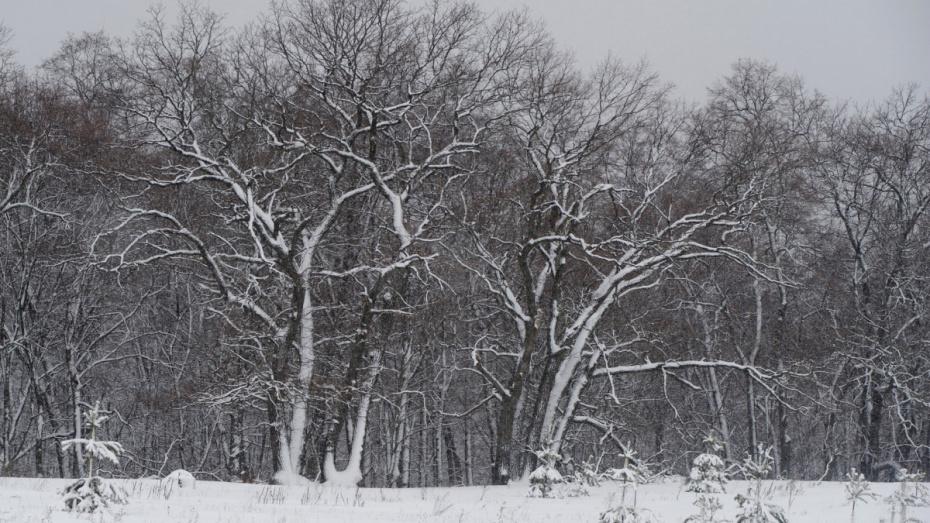 В Воронежской области волонтеры высадили 100 га лесов за 2018 год
