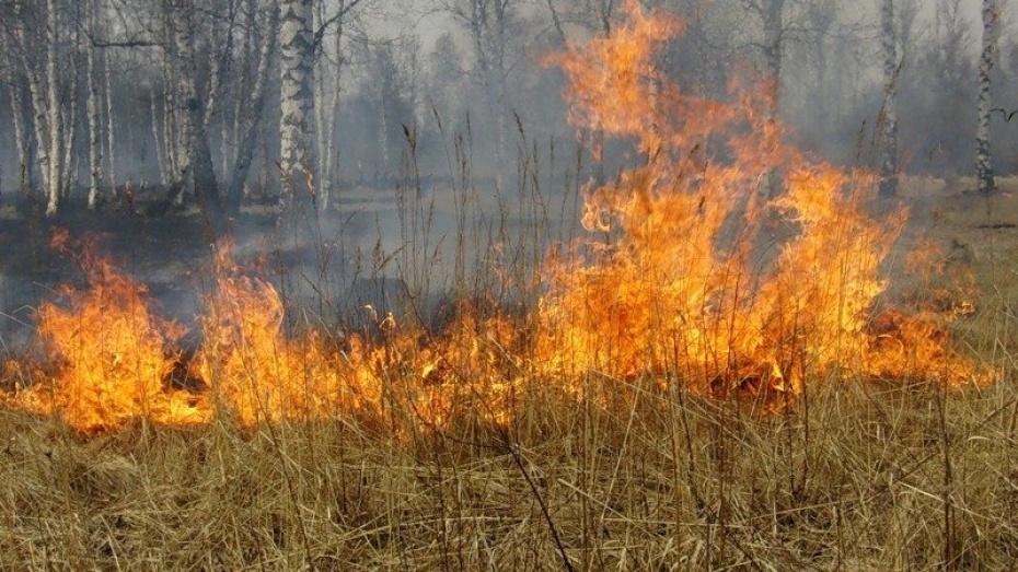В Воронежской области установился наивысший класс пожарной опасности