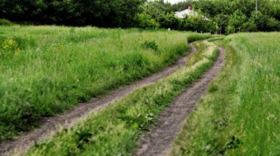 «Важно ехать в село». Депутаты Госдумы от Воронежской области отчитались о своей работе