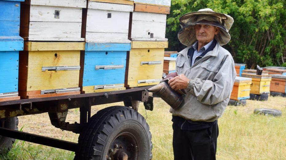 «Умнейшие создания». О чем рассказал воронежский пчеловод с 50-летним стажем