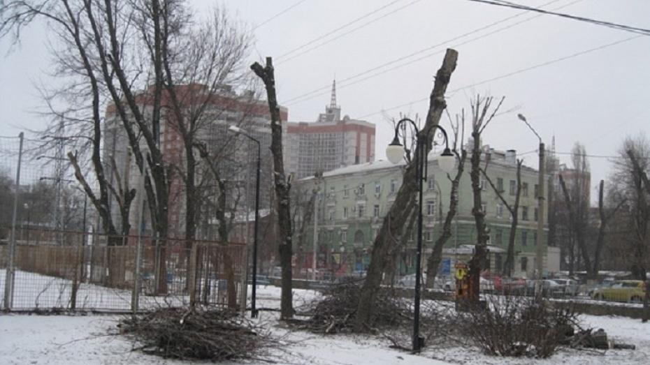 Вместо больных вырубленных: вКомсомольском сквере Воронежа весной посадят новые деревья