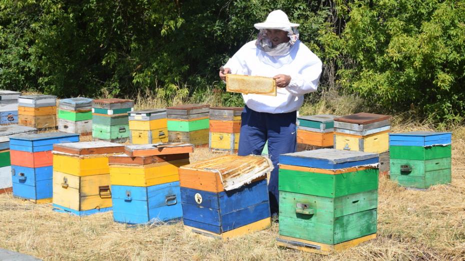 Пчеловоды из 6 районов создали областной кооператив «Воронежские пасеки»