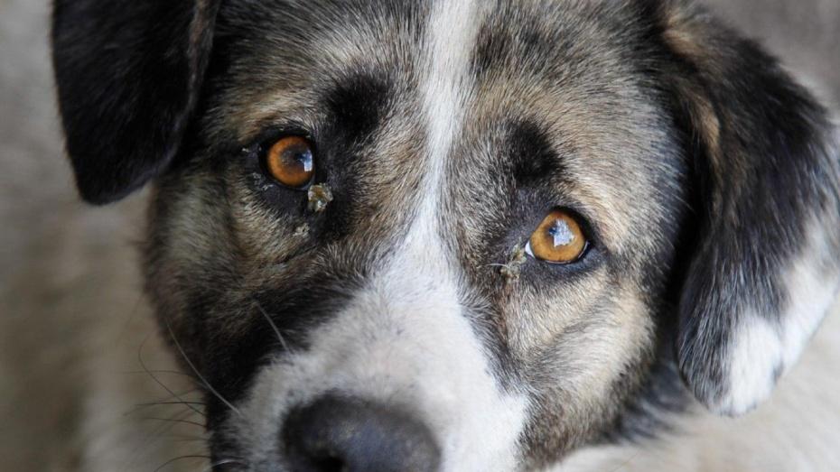 ВВоронеже появится закон о«злых собаках»