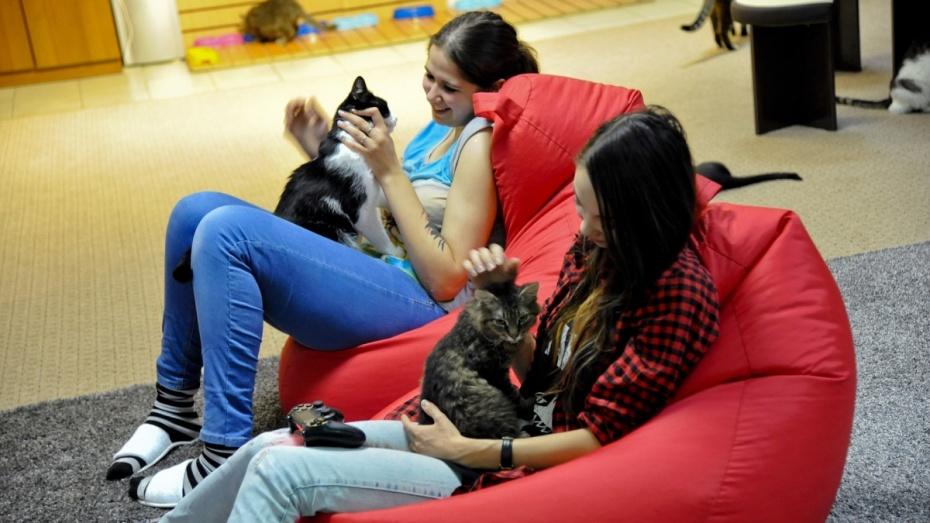 В Воронеже открылось кафе для любителей кошек