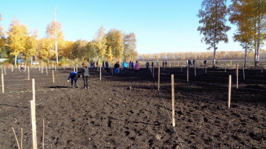 В эртильской деревне Буравцовка жители заложили парк