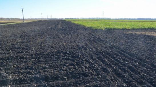 Органическим земледелием в Воронежской области займутся 12 предприятий