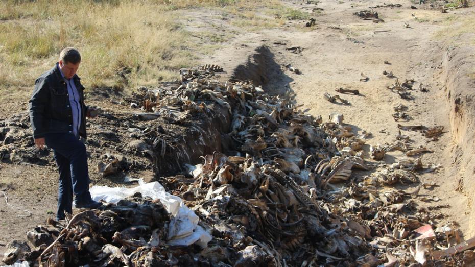 Ольховатские полицейские нашли устроившего незаконный скотомогильник в сосновом бору