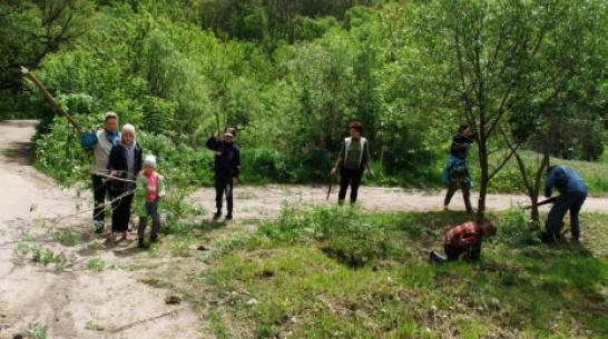 В хохольском поселке Орловка активисты расчистили центральную улицу от старых деревьев