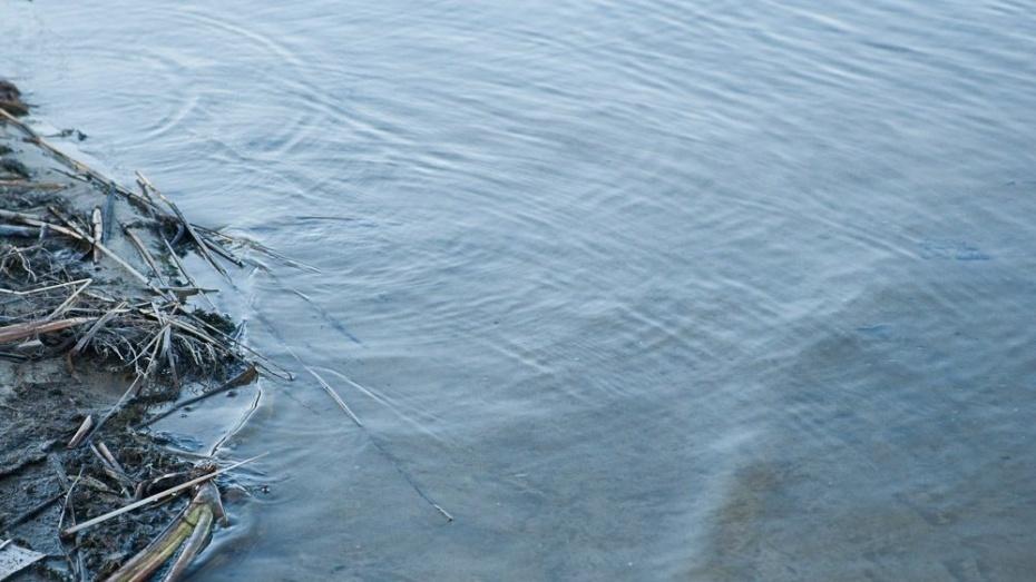 Жители Воронежской области сообщили о грязной воде и гибели рыбы в реке Подгорной