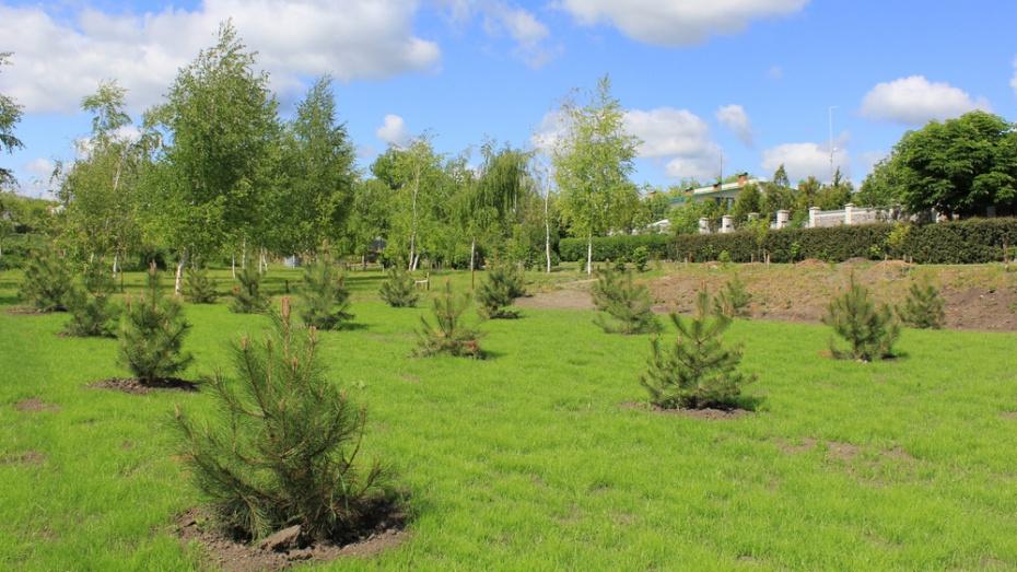 В верхнемамонском селе Дерезовка активисты посадили Лес Победы на пустыре