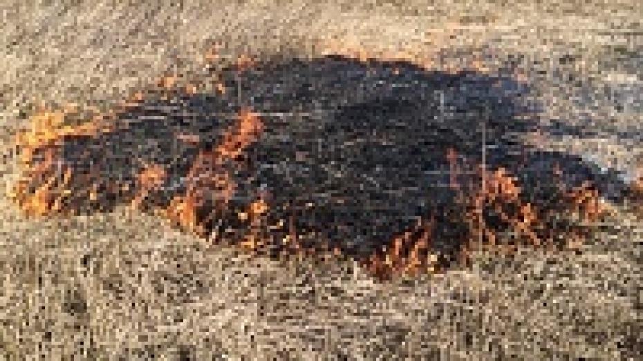 Рослесхоз поблагодарил воронежцев за вклад в борьбу с поджогами сухой травы