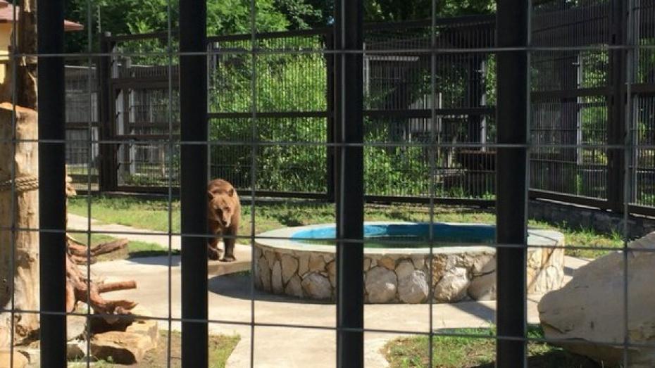 Из-за жары животные Воронежского зоопарка стали чаще купаться и есть мороженое
