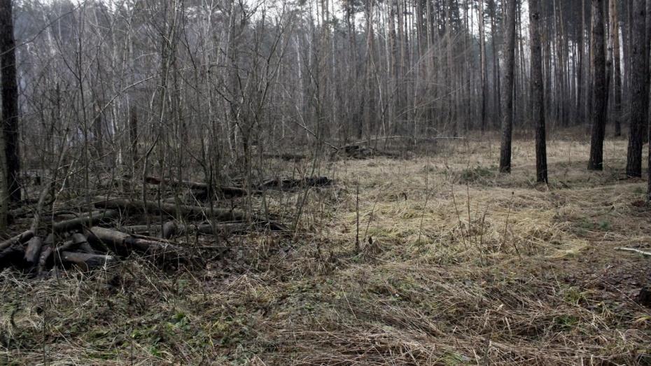 В заказнике «Воронежский» незаконно вырубили 36 дубов на сумму более 1 млн рублей