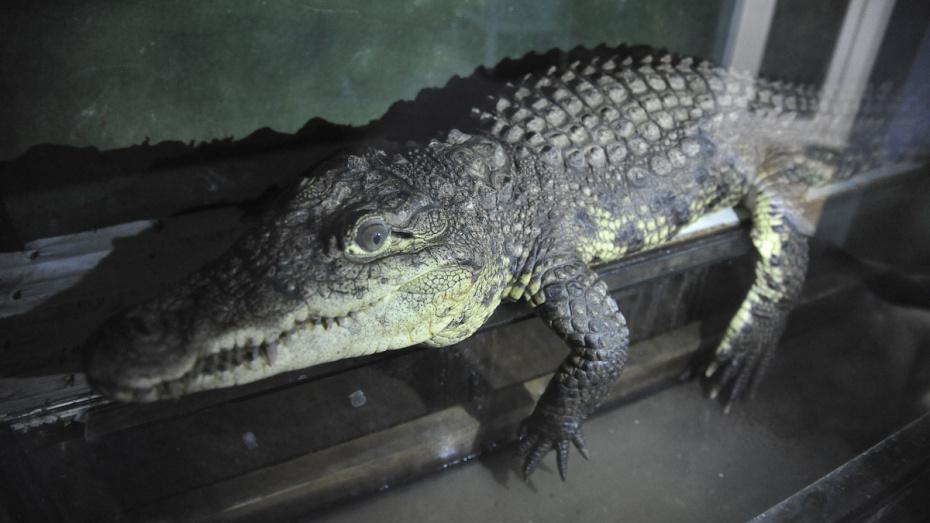 Воронежцы снова увидятся с животными в зоопарке 7 июля
